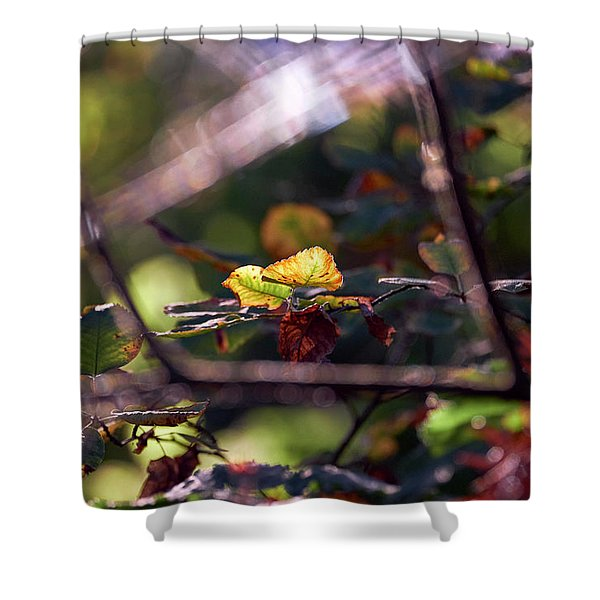 Shower Curtain featuring the photograph Autumn Beginnings by Whitney Goodey
