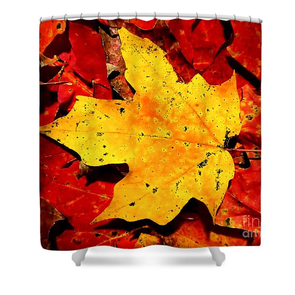 Autumn Beige Yellow Leaf On Red Leaves Shower Curtain
