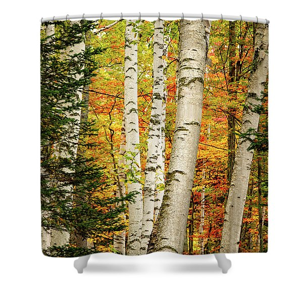 Shower Curtain featuring the photograph Autumn Birch by Jeff Sinon