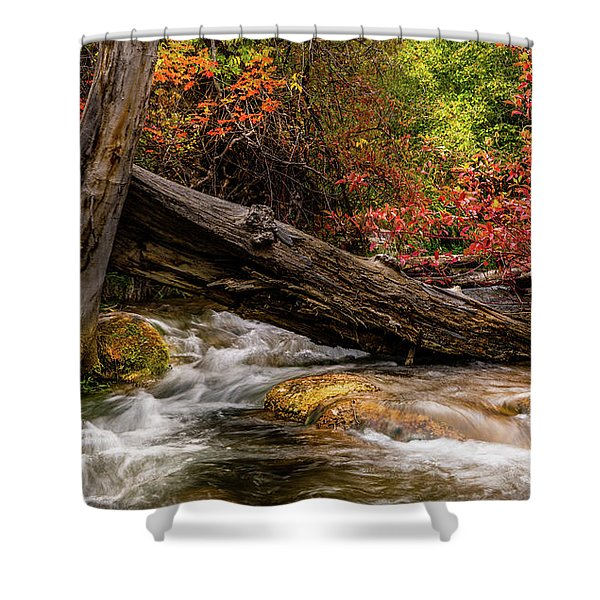 Autumn Dogwoods Shower Curtain