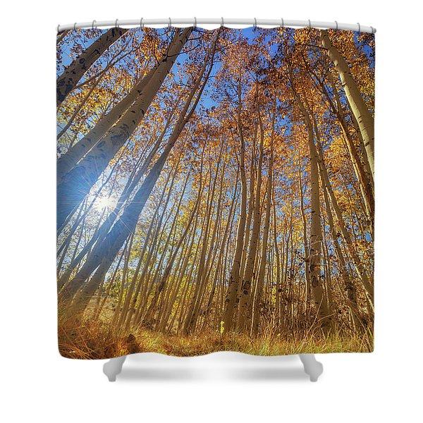 Autumn Giants Shower Curtain