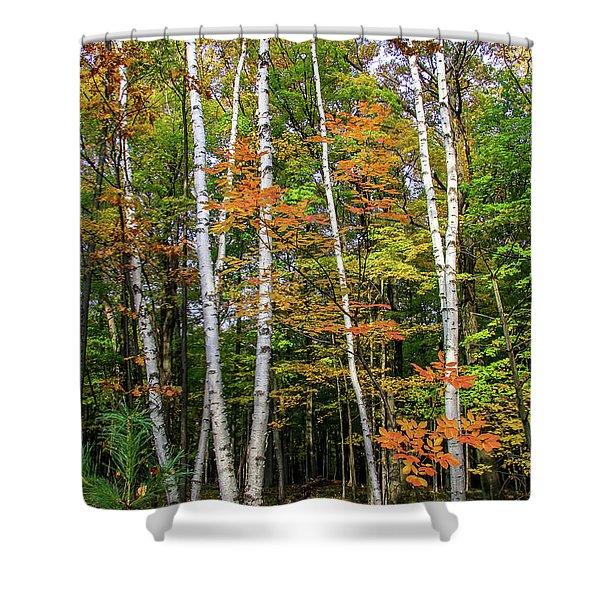 Autumn Grove, Vertical Shower Curtain