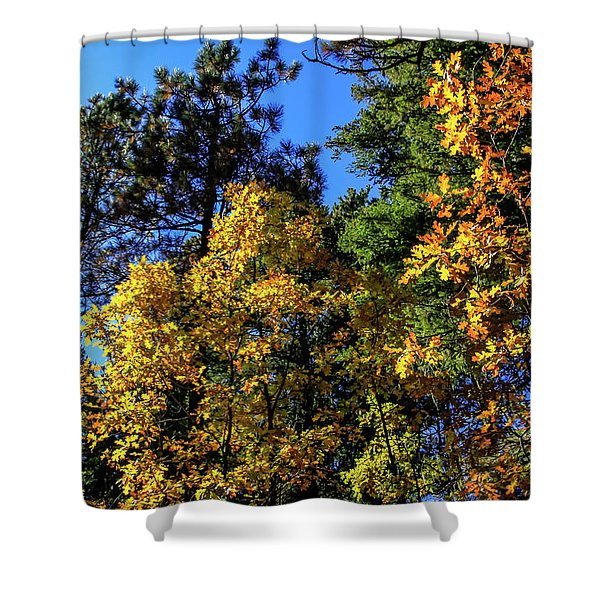 Autumn In Apache Sitgreaves National Forest, Arizona Shower Curtain