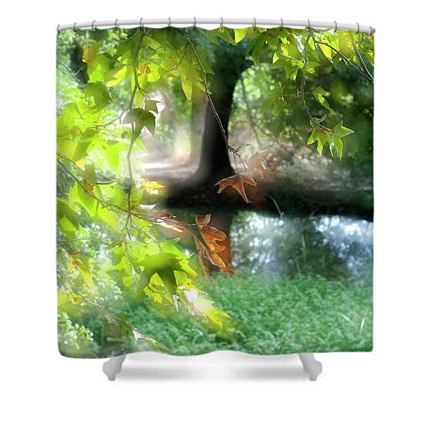 Autumn Leaves In The Morning Light Shower Curtain