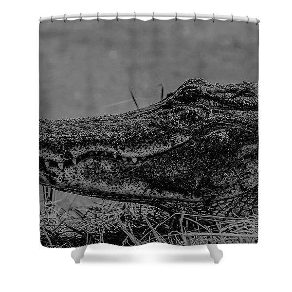 B And W Gator Shower Curtain