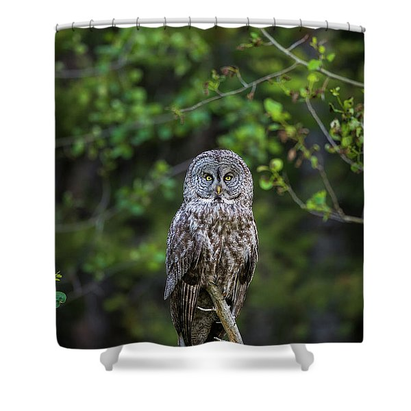 Shower Curtain featuring the photograph B16 by Joshua Able's Wildlife