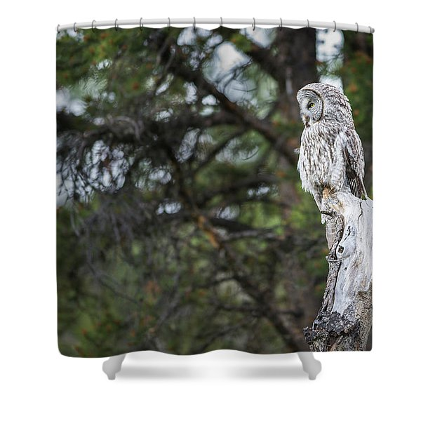 Shower Curtain featuring the photograph B17 by Joshua Able's Wildlife