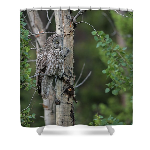 Shower Curtain featuring the photograph B18 by Joshua Able's Wildlife