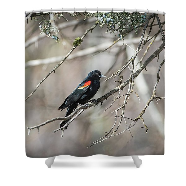 Shower Curtain featuring the photograph B26 by Joshua Able's Wildlife
