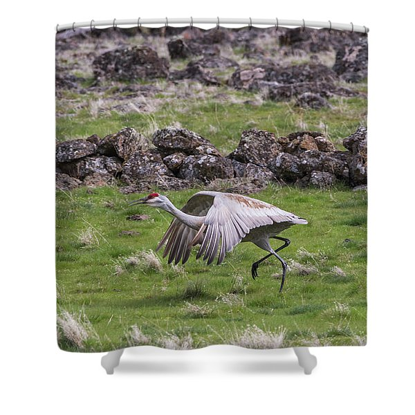 Shower Curtain featuring the photograph B27 by Joshua Able's Wildlife