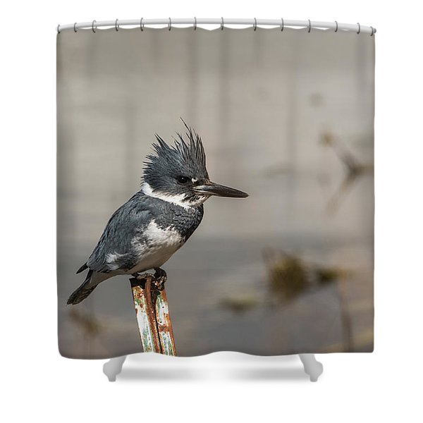 Shower Curtain featuring the photograph B31 by Joshua Able's Wildlife