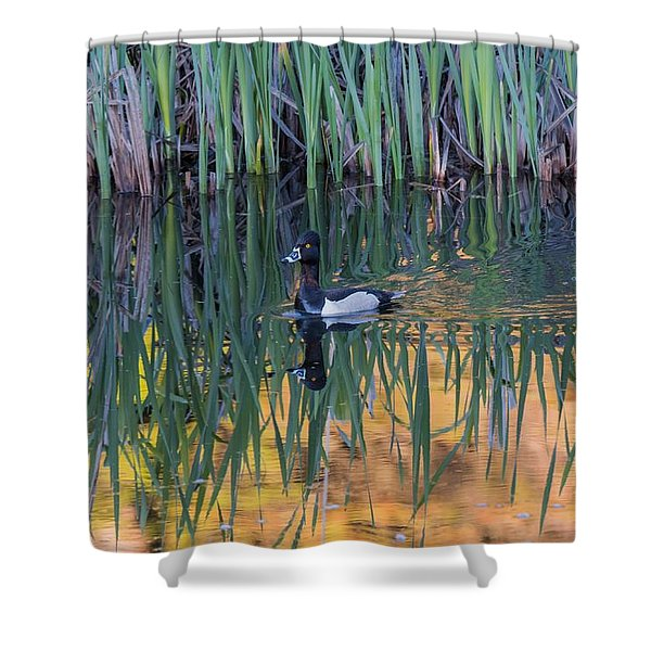 Shower Curtain featuring the photograph B32 by Joshua Able's Wildlife