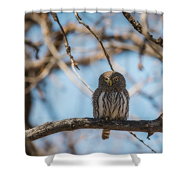 Shower Curtain featuring the photograph B34 by Joshua Able's Wildlife