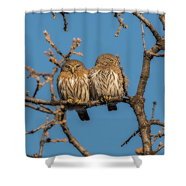 Shower Curtain featuring the photograph B36 by Joshua Able's Wildlife