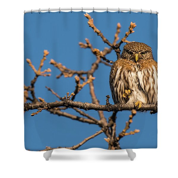 Shower Curtain featuring the photograph B37 by Joshua Able's Wildlife