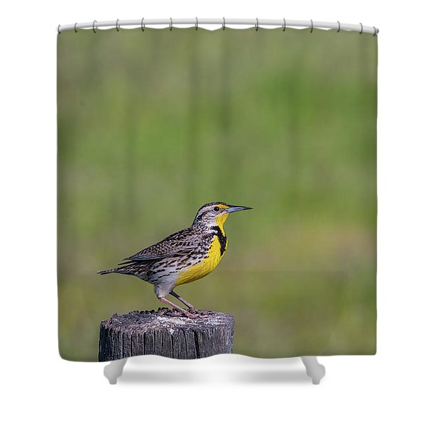 Shower Curtain featuring the photograph B39 by Joshua Able's Wildlife