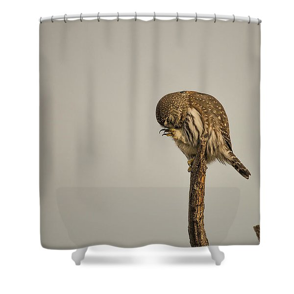Shower Curtain featuring the photograph B41 by Joshua Able's Wildlife