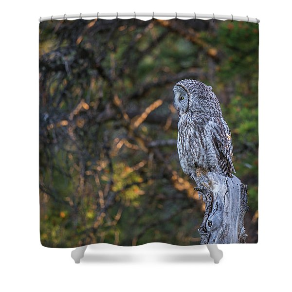 Shower Curtain featuring the photograph B46 by Joshua Able's Wildlife