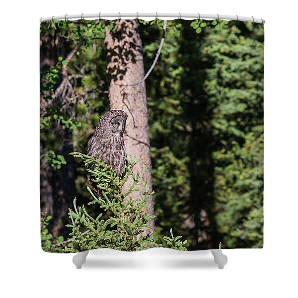 Shower Curtain featuring the photograph B50 by Joshua Able's Wildlife