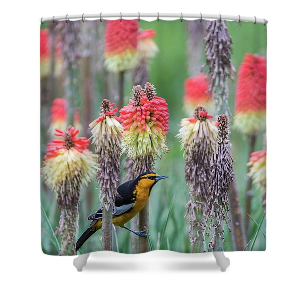 Shower Curtain featuring the photograph B58 by Joshua Able's Wildlife