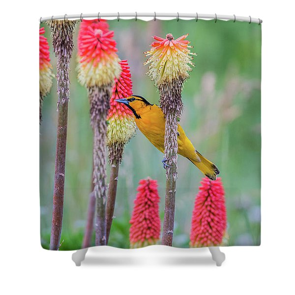 Shower Curtain featuring the photograph B59 by Joshua Able's Wildlife