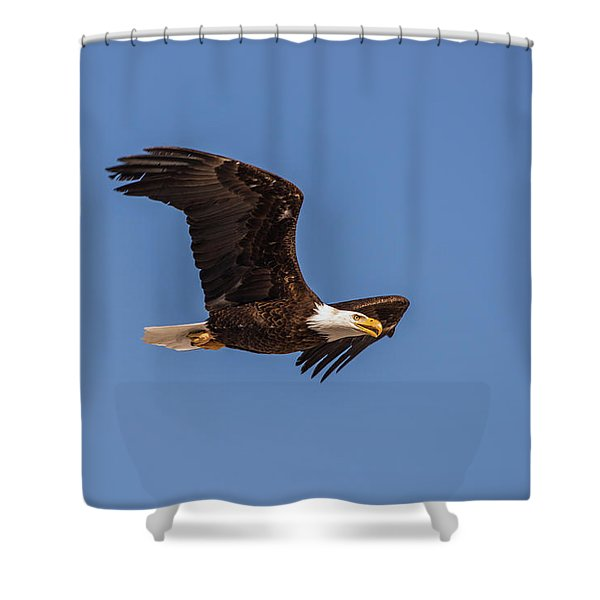 Shower Curtain featuring the photograph B8 by Joshua Able's Wildlife