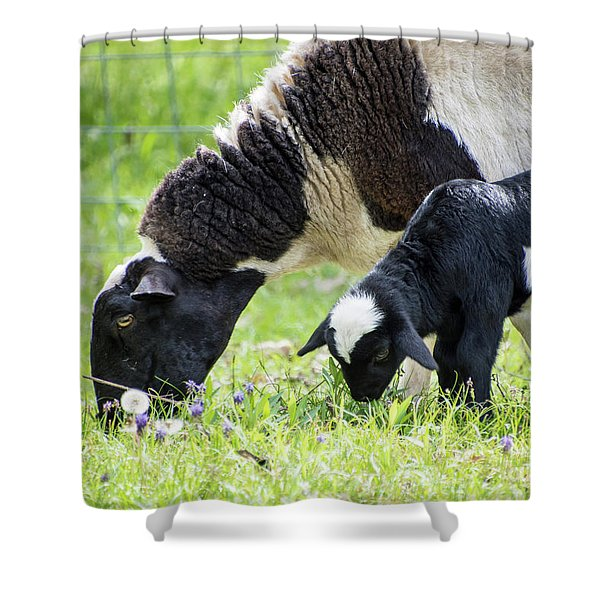 Baba And Pepe Grazing Shower Curtain