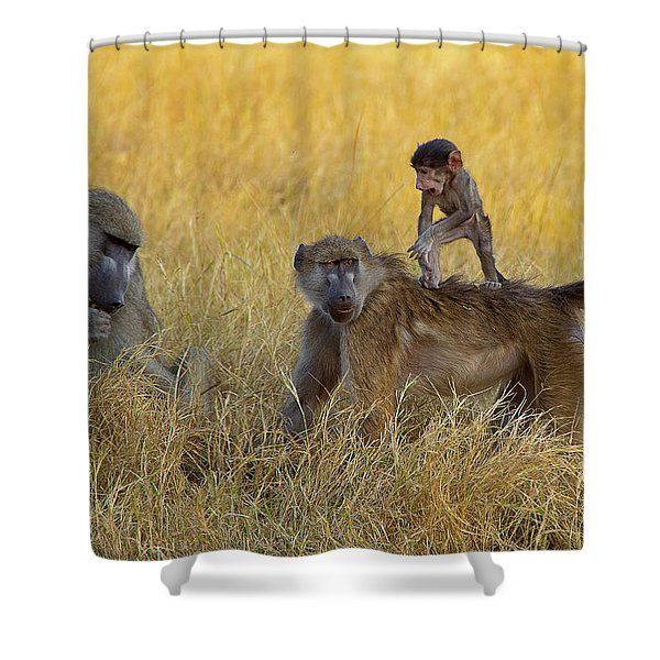 Baboons In Botswana Shower Curtain