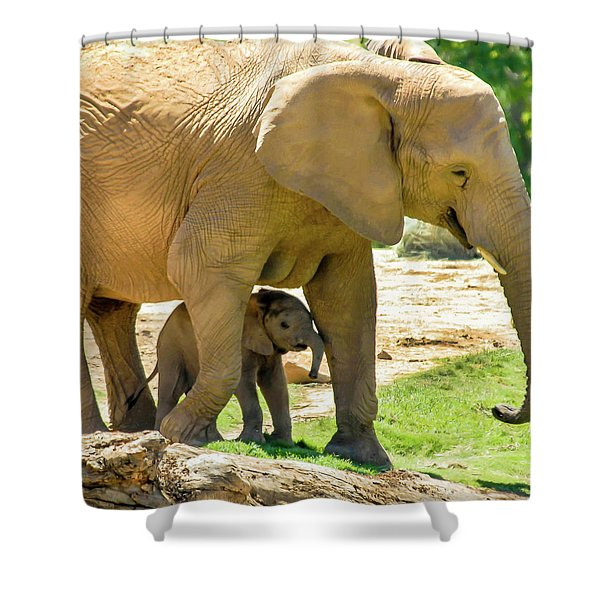 Baby's Safe House Shower Curtain