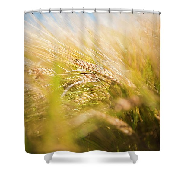 Background Of Ears Of Wheat In A Sunny Field. Shower Curtain