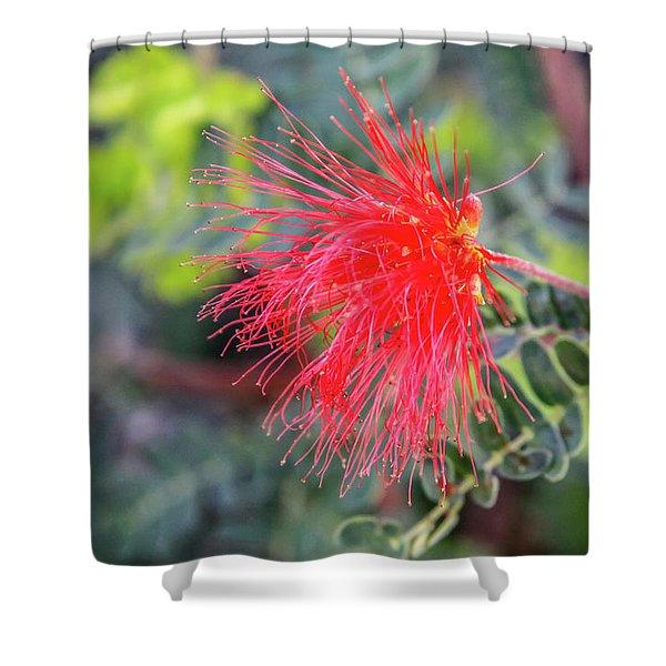 Baja Fairy Duster Shower Curtain