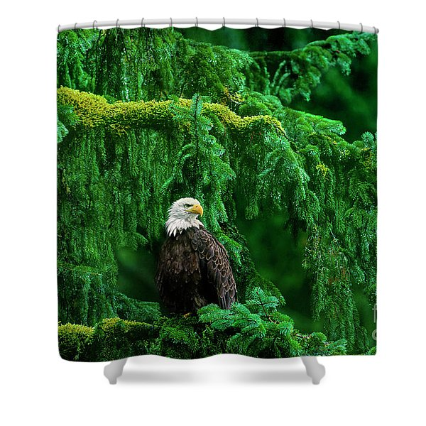 Bald Eagle In Temperate Rainforest Alaska Endangered Species Shower Curtain