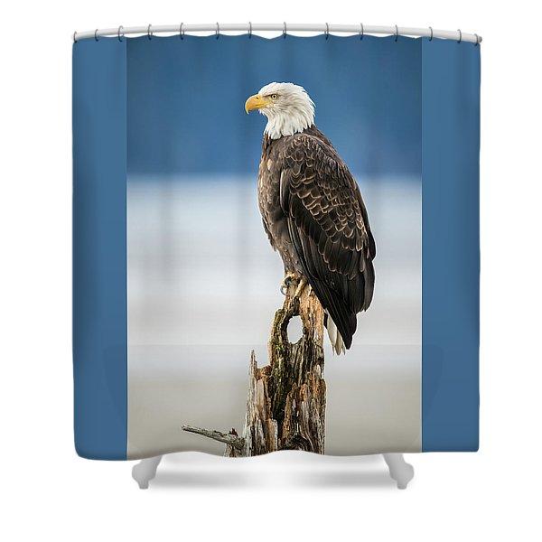 Bald Eagle On Snag Shower Curtain