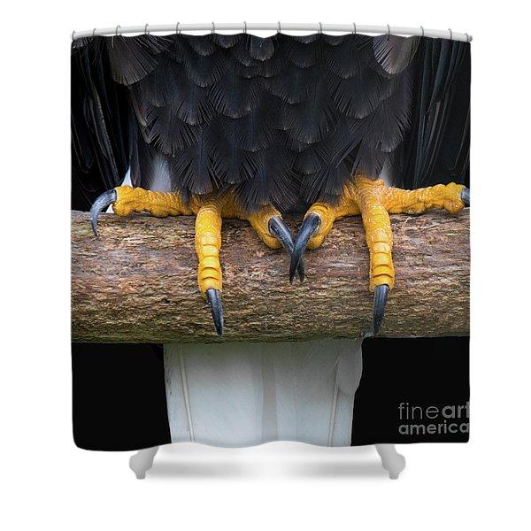 Bald Eagle Talons Shower Curtain