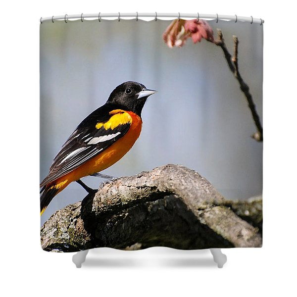 Baltimore Oriole Shower Curtain