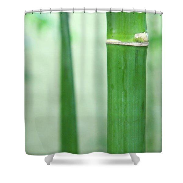 Bamboo 0312 Shower Curtain
