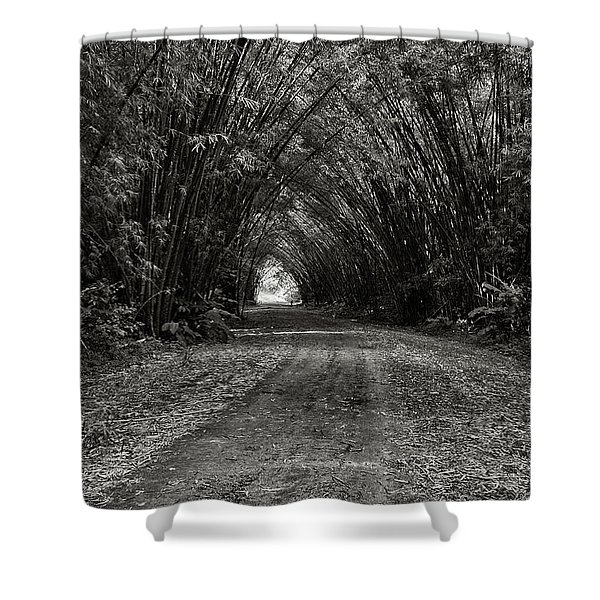 Bamboo Cathedral I Shower Curtain