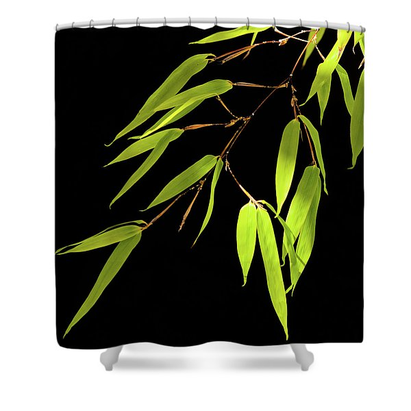 Bamboo Leaves 0580a Shower Curtain