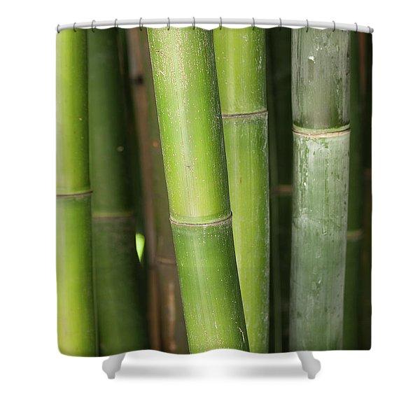 Bamboo Stalk 4057 Shower Curtain