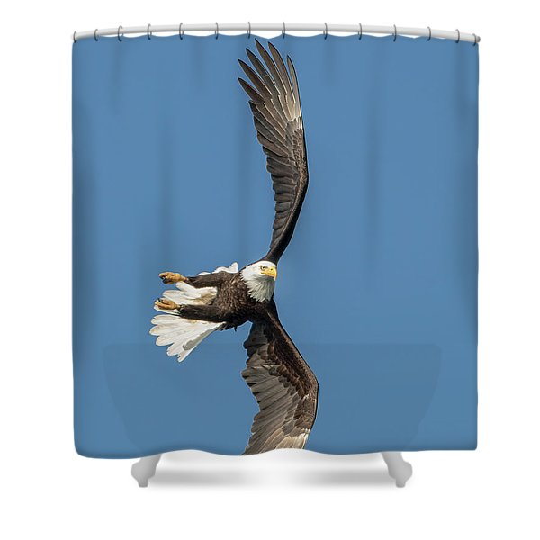 Banking Bald Eagle Shower Curtain
