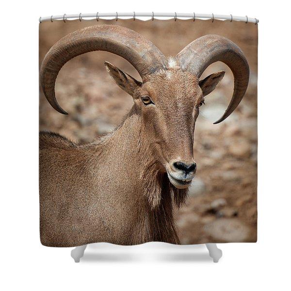Barbary Sheep Portrait Shower Curtain