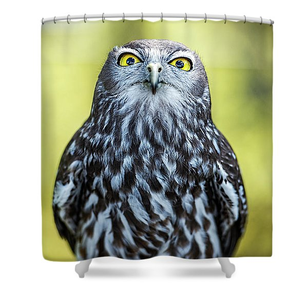 Shower Curtain featuring the photograph Barking Owl by Rob D Imagery