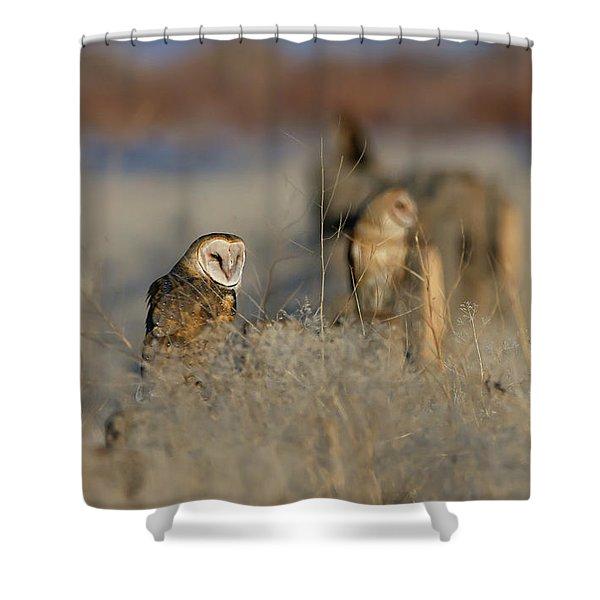 Barn Owls 9 Shower Curtain
