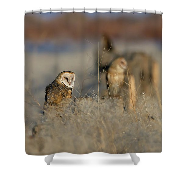 Barn Owls 9 Shower Curtain