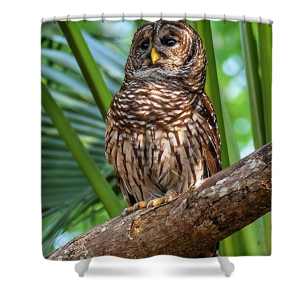 Barred Owl On Perch Shower Curtain