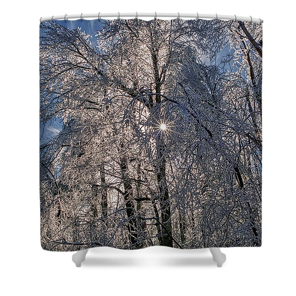 Bass Lake Trees Frozen Shower Curtain