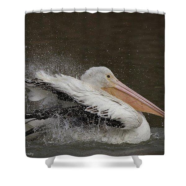 Bathing Pelican Shower Curtain
