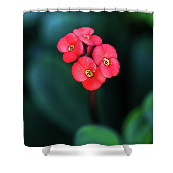 Beautiful Summer Flowers Shower Curtain