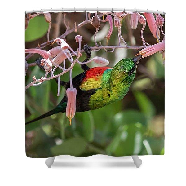 Beautiful Sunbird Shower Curtain