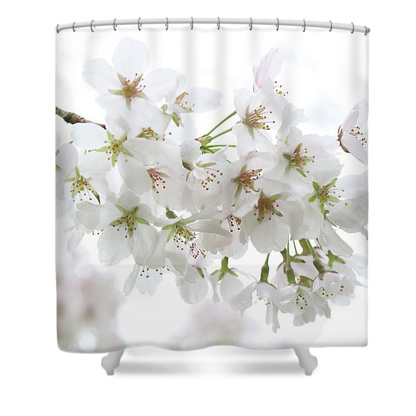 Beautiful White Cherry Blossoms Shower Curtain